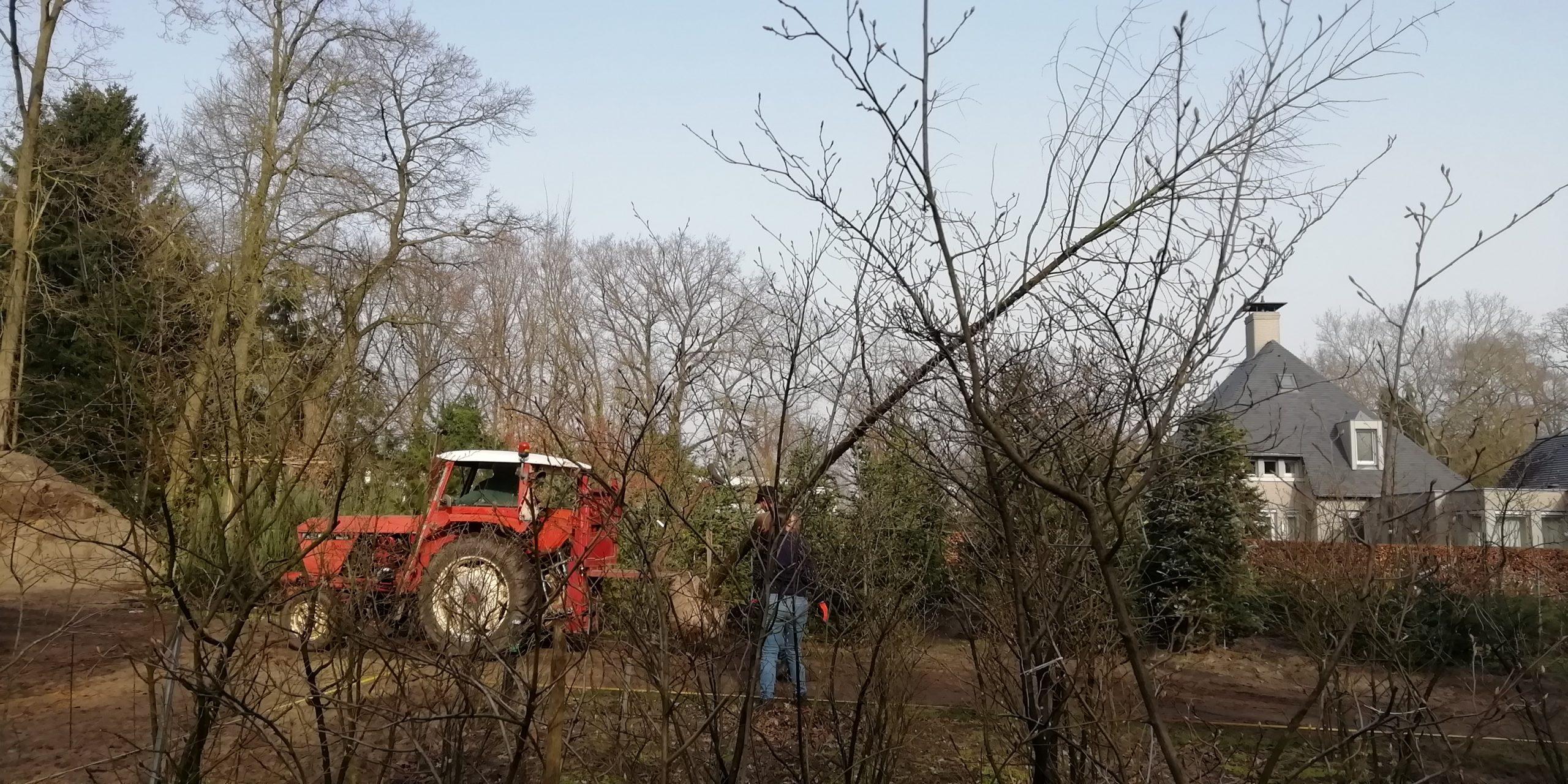 Onderzoek schuine bomen